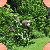 les arbustes